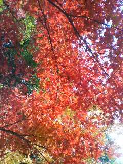 紅葉(^o^)