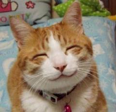 招き猫(^o^)