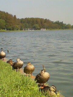 水元公園(^o^)