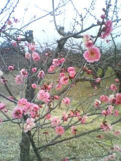梅の花(^o^)