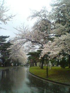 冷たい雨(^_^;)