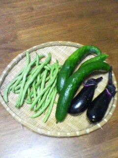 朝採りたて野菜(^o^)