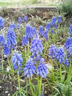 花々(^o^)