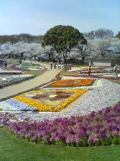 桜パート2(^o^)