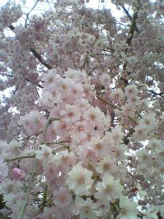 花に抱かれて(^o^)