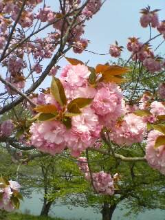 花に見られて(^o^)