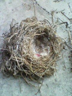 ツバメの巣(^_^)