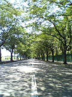 街路樹(^o^)
