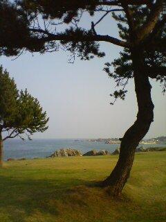 芝生と海(^o^)