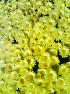 黄色い花(^o^)