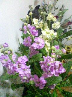 春の予感(^o^)