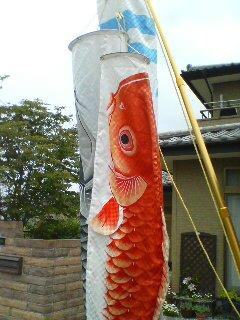 鯉のぼり(^o^)