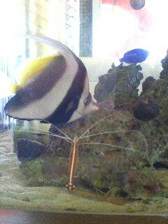 熱帯魚(^o^)