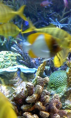 水族館(^O^)