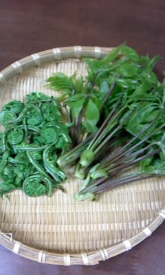 山菜(^o^)