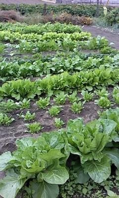 冬野菜(^o^)