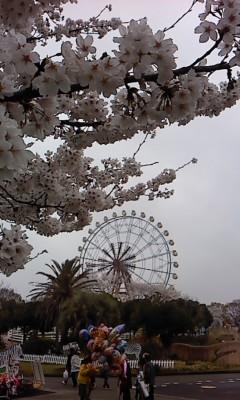 公園の桜(^o^)