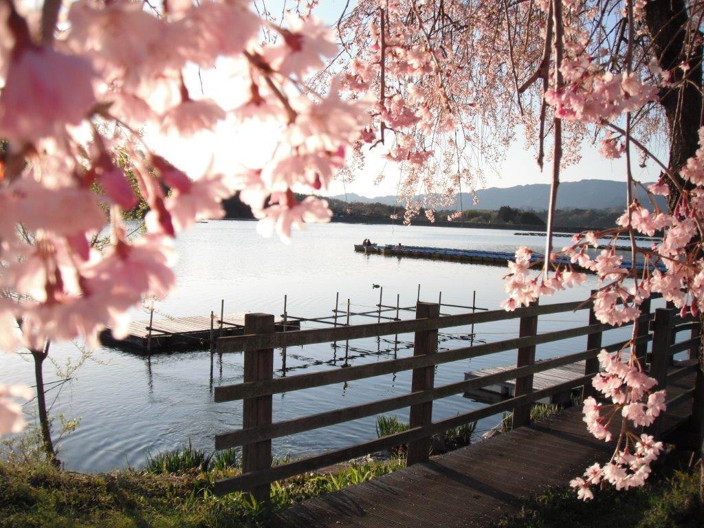 湖畔の朝(^o^)