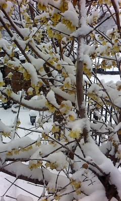 梅に雪(^o^)