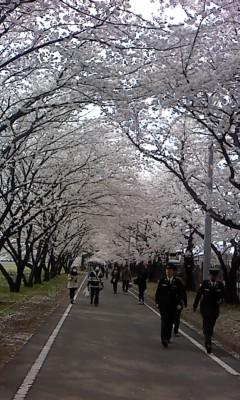 桜のトンネル(^o^)