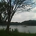 湖に潜る鳥